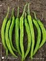 Chandrika 30 F-1 Hybrid Chili Seeds