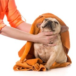 Microfiber Towels for pet