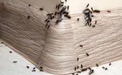 Ants Management Service