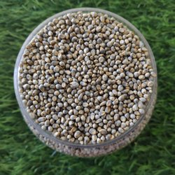 Deshi White Pearl Millet(Bajra) Natural (Chemical Free)