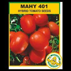HYBRID TOMATO - MAHYCO / MAHY 401