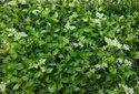 Decorative Artificial Green Wall
