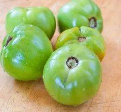 印度新鲜的绿色西红柿