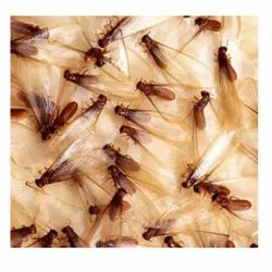 One Time Depends On Sqft Anti Termite Pest Control Service