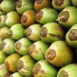 A Grade Solid coconut