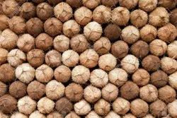 A Grade Solid Semi Husked Coconut, Packaging Size: 50 Kg, Coconut Size: Large