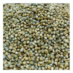 Cattle Feed Green Millet, Gluten Free