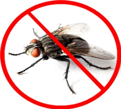 House Flies Pest  Control Service