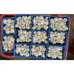 Pan India Organic Button Mushroom, Packaging Type: Box, Packaging Size: 100 Gm