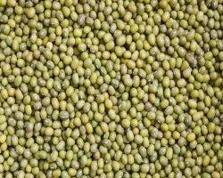 Organic Green Gram Moong, Pan India, High in Protein