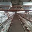 GI Poultry Cage