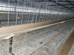 Broiler Breeder Layer Cage
