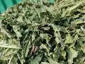 Dandelion Leaves TBC