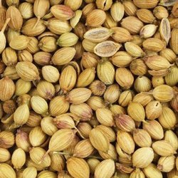 Fresh Organic Coriander Seeds