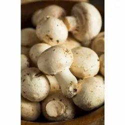Fresh Button Mushroom, Packaging Type: Box, Packaging Size: 200 Gm