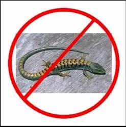 Residential Lizard  Control Service