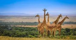 Pan India West Africa Wildlife Tour Package