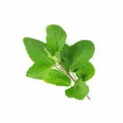 Herbo Nutra Green Tulsi方舟,用于阿育吠陀医学,包装类型:塑料瓶