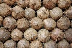 A Grade Solid Semi Husked Coconut, Coconut Size: Large