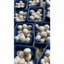 Fresh White Button Mushroom