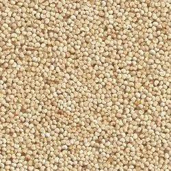 Poppy Seeds (Khaskhas)