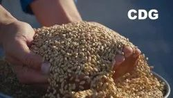 Agricultural Commodities Inspection Services