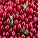 Cranberry Extract 25% Proanthocyanidin