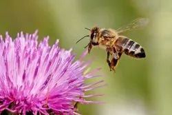 Chemical Treatment Bee Pest Control Services