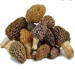A Grade Morel Mushroom, Net Gunny Bag, Packaging Size: 25 Kg