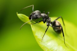 Ants Pest Control Service
