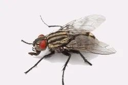 House Fly Pest Control Services