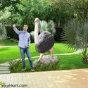 FRP Ostrich Statue - in real size