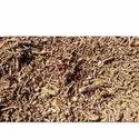 Guduchi TBC - Tea Bag Cut