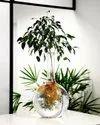 Hydroponic Plants