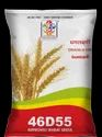 Dhanlaxmi Improved Wheat 46d55 Seeds, 3%, Packaging Size: 20kg