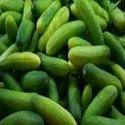 Food Grade Cucumber extract