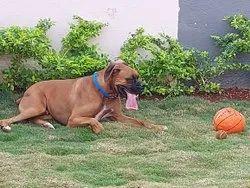 Veterinary Treatment Services