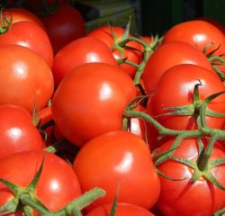 Green World Tomato F1 Hybrid Suhyana Seeds(50 seeds)