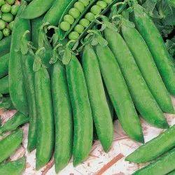 Pea Seed