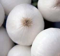 Green World Onion Imported White Globe Seeds(50 seeds)