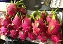 Imported Dragon Fruits