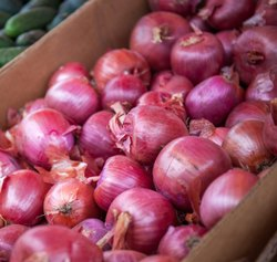 Green World Onion Star Z Black Seeds