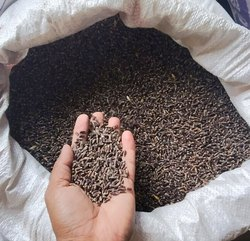 A D Food & Herbs Organic Black Wheat