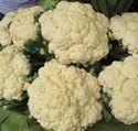 Green World Cauliflower F1 Him Daksh Seeds(50 seeds)
