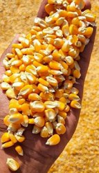 Yellow Corn Maize For Animal Feed Grade