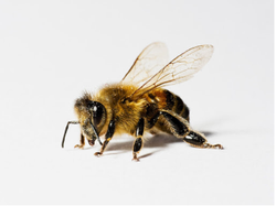 Chemical Treatment Bee Control Services