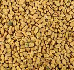 Green World Fenugreek Methi Mota Beej Large Leaf Seeds