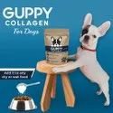 Collagen for Dogs
