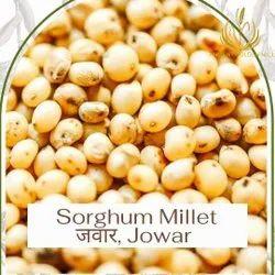 Millet Sorghum Jowar