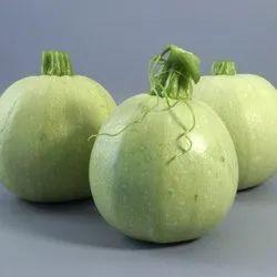 Green World Chappan Kadu ( Hybrid Aayan) Summer Squash Seeds(50 Seeds)